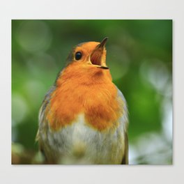 Sing to Me Larry! Canvas Print