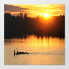 Canada Geese Family Sunset Canvas Print