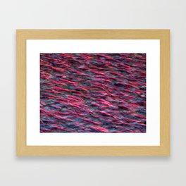 Kokanee Salmon in Spawning Colours Framed Art Print