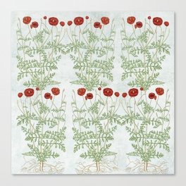 A reminder of past poppies Canvas Print