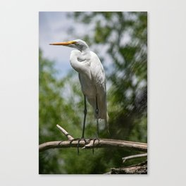 Great Egret - Utah Canvas Print