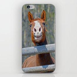 Horse Humour iPhone Skin