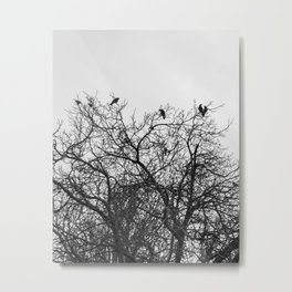 A murder of crows sitting in a tree Metal Print