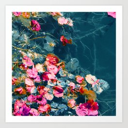 Flowers Floating in A Remote Pond Art Print