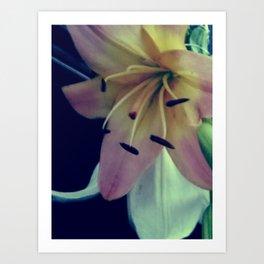 pale lily pink Art Print