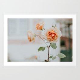 Peach Roses by the Window Art Print