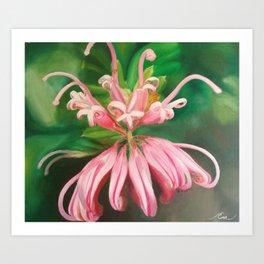 Australia flower Art Print