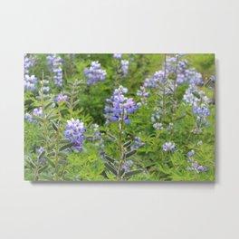 Lupine Flowers Metal Print