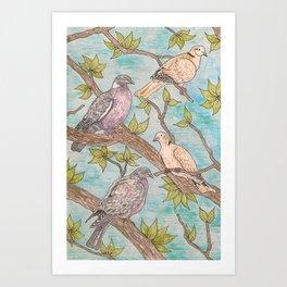 Various Pigeons Art Print