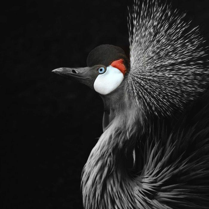 CROWNED CRANE by Monika Strigel Duvet Cover
