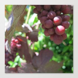 Red Grape 5 Canvas Print