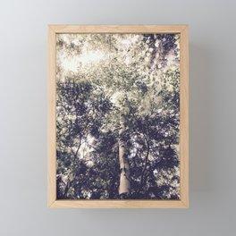 Dappled Light Filtered Through Trees Framed Mini Art Print