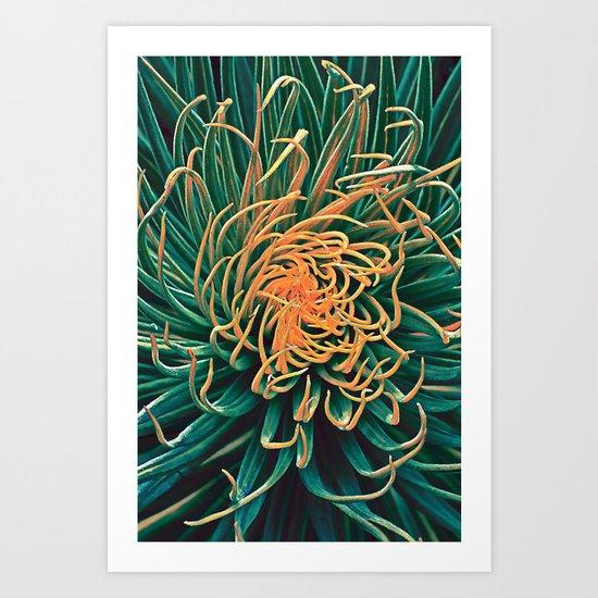 Green & orange succulent Art Print