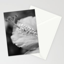 Hybiscus in Black and White Stationery Cards