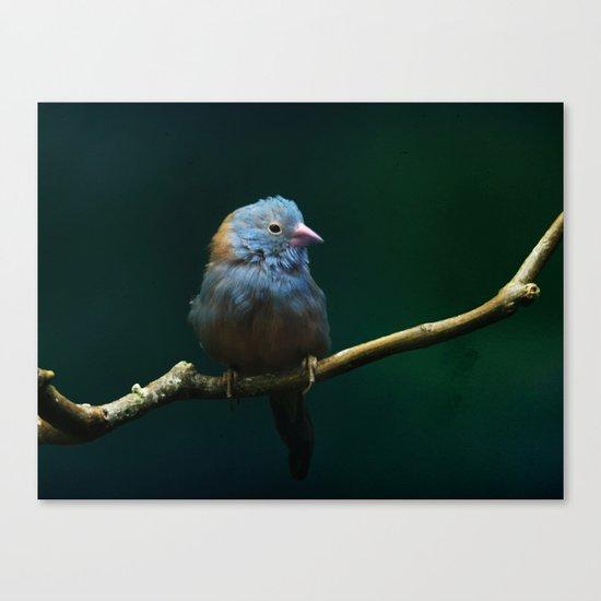Cordon Bleu Canary Canvas Print
