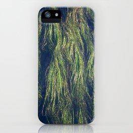 Wild Rice of San Marcos Texas iPhone Case