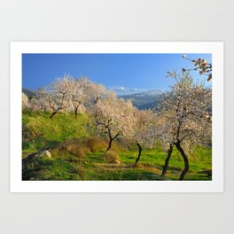 Flowering almond at the snowy mountains Art Print