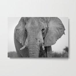 B&W Elephant  Metal Print
