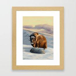 Muskox Framed Art Print