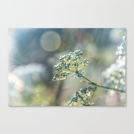 Early morninglight in a meadow Canvas Print