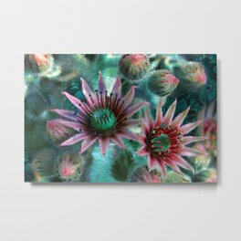Succulents Flower Garden Metal Print