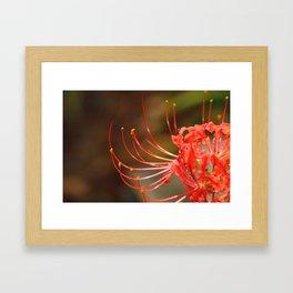 Blooms for Dorothy Framed Art Print