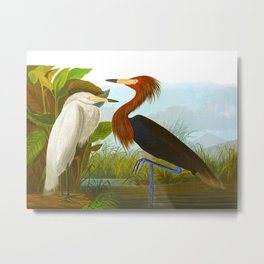 Purple Heron Metal Print