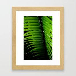 Palm tree leaf - tropical decor Framed Art Print
