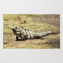 Iguana in the Ruins of Tulum #2 Rug