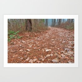 Frosty Forest Trail Art Print
