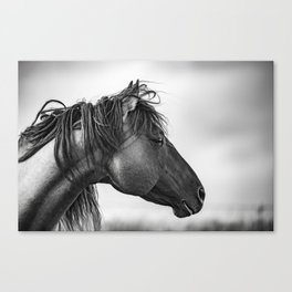 Horse in Sepia Canvas Print