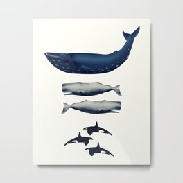 Whale Counting 123  Metal Print