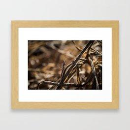 Hidden grashopper Framed Art Print
