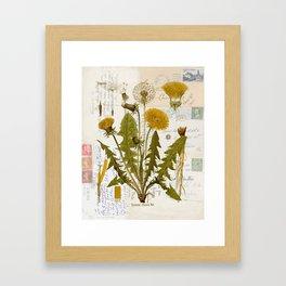 Vintage Dandelion on Antique Postcards Framed Art Print