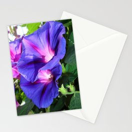 A Pair of Vibrant Morning Glories In Full Bloom Stationery Cards