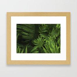 Within the Ferns Framed Art Print
