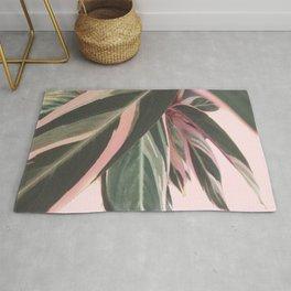 Sweet Pink Kalathea Rug