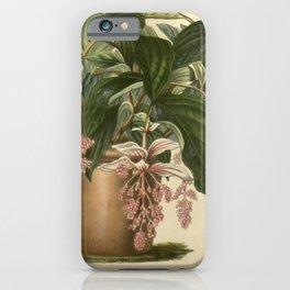 Flower medinilla magnifica20 iPhone Case