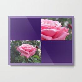 Pink Roses in Anzures 6 Blank Q9F0 Metal Print