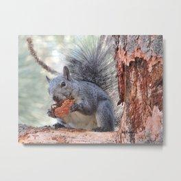 Squirrel Snack Metal Print