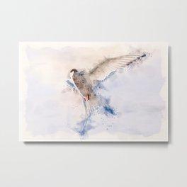 Artic Tern in Flight Metal Print