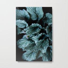 Powerful nature. Begoniaceae Metal Print