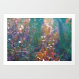 Divuse light specially in autumn Art Print