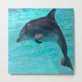 Baby Dolphin Metal Print