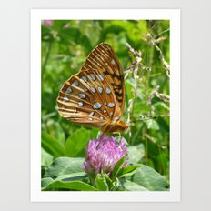 Great Spangled Fritillary Butterfly 2 Art Print