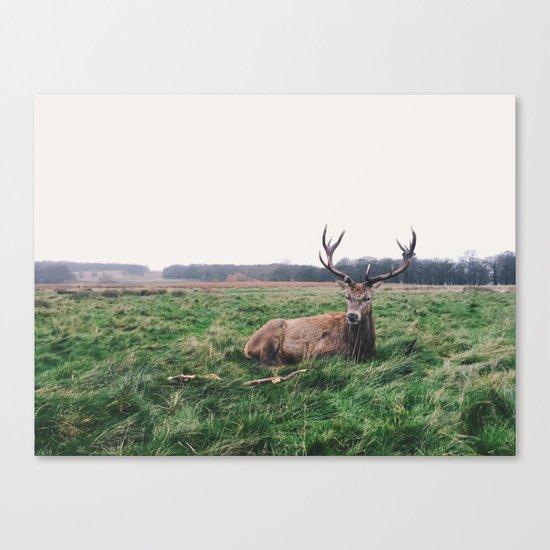 Deer #landscape Canvas Print