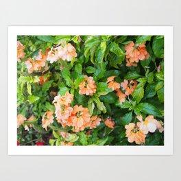 Beautiful Peach Flowers Art Print