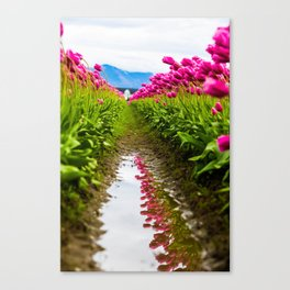 Tulips Pressed Against the Sky Canvas Print