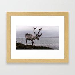 mighty reindeer Framed Art Print