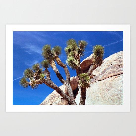 Joshua Tree Blue Sky Art Print
